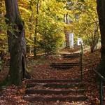 Herbst am Goldberg