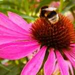 BlumeA12-web