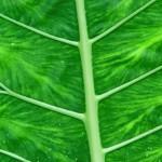 BlumeA5-web