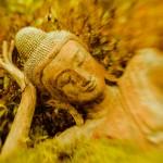 Buddha21web