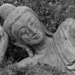 Buddha23web