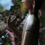 Buddha24web