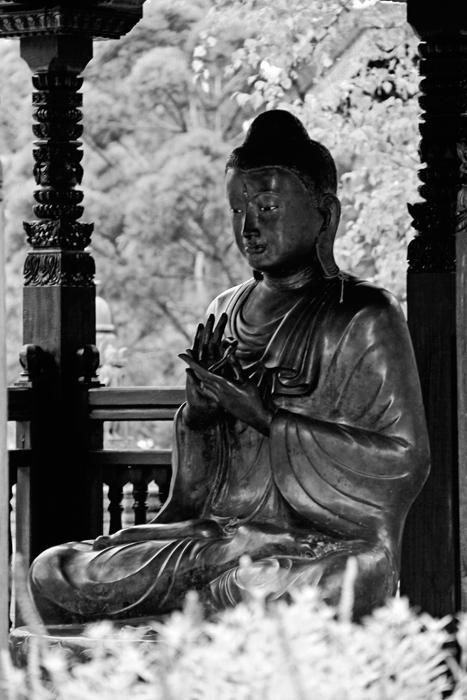 Buddha8web