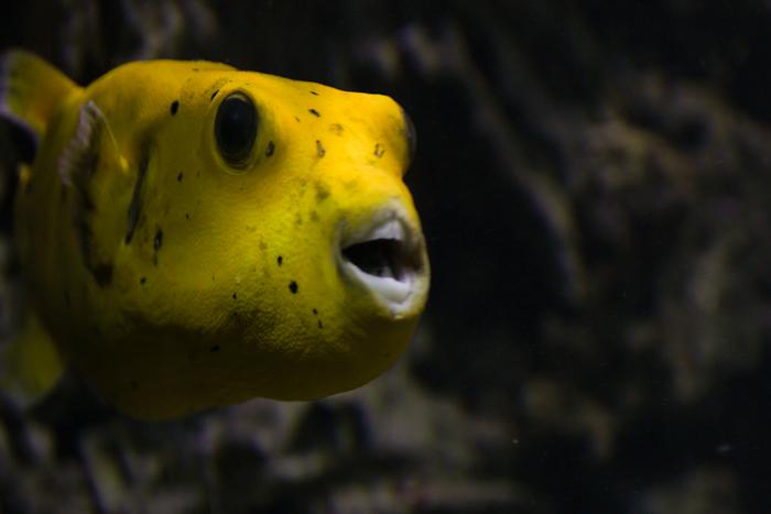 KugelfischWeb