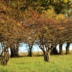 Obstbaum-web