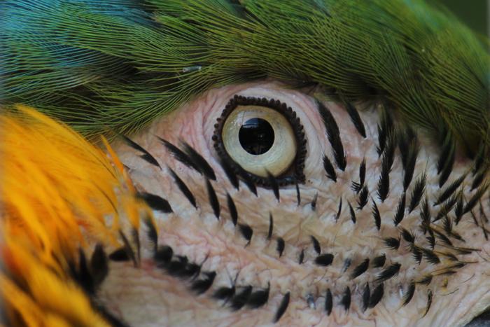 Papagei2Web