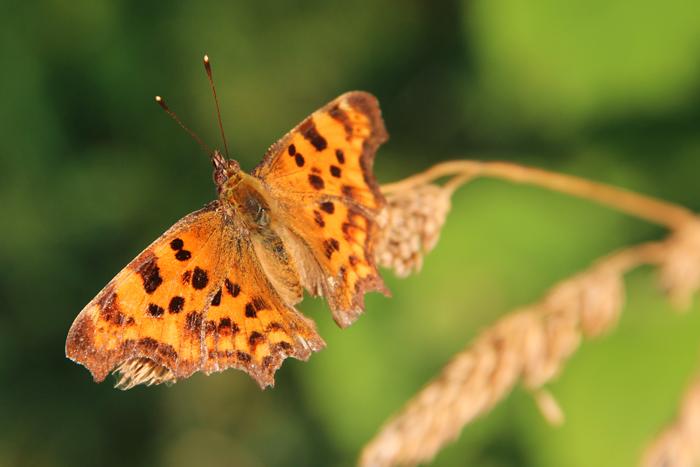 Schmetterling-1-web