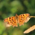 Schmetterling-2-web