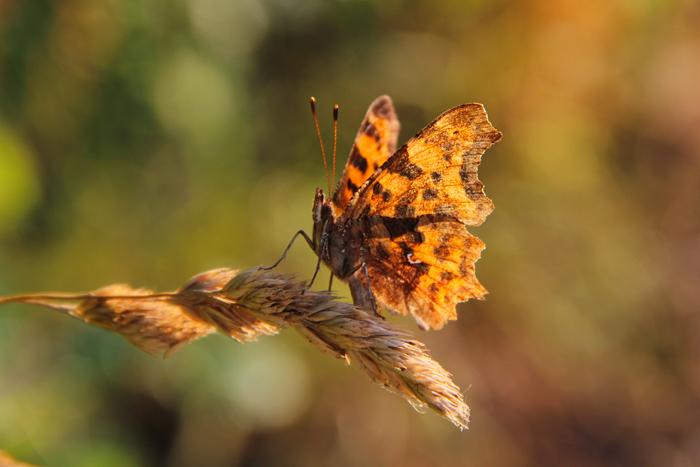 Schmetterling-3-web