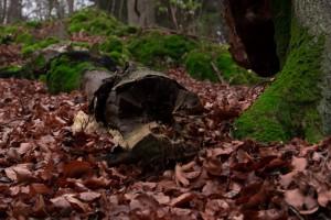 Wald-2-web