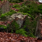 Wald-3-web