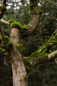 Wald-5-web